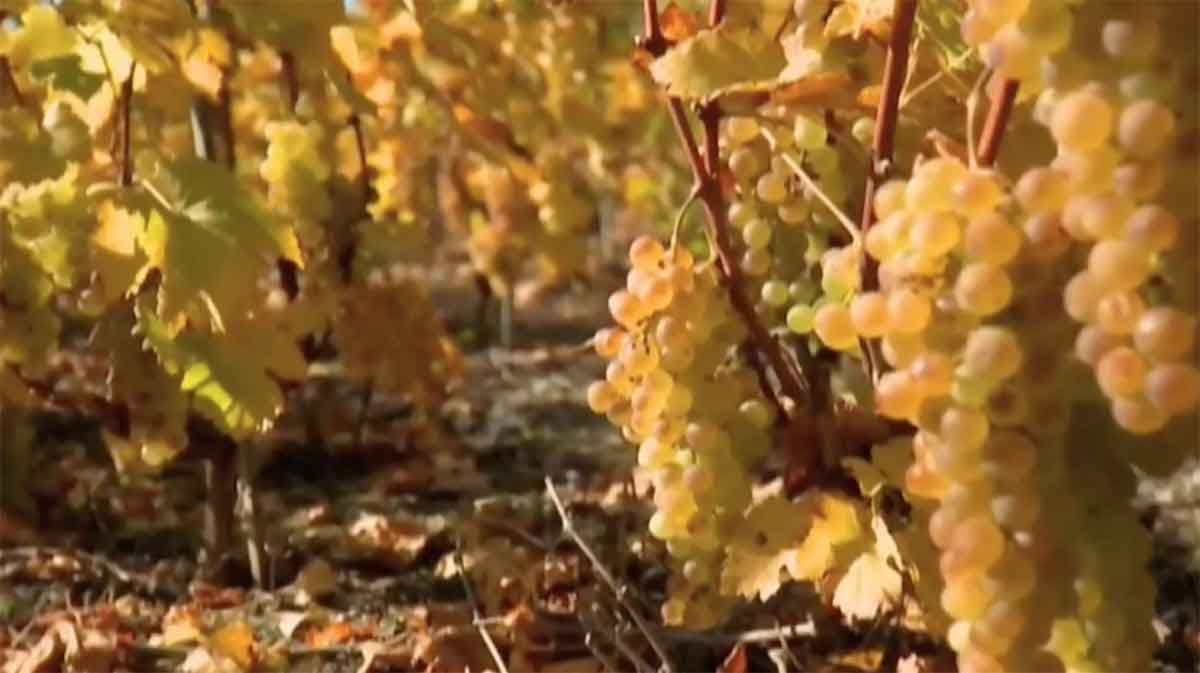 «Herbsttag», de Rainer Maria Rilke