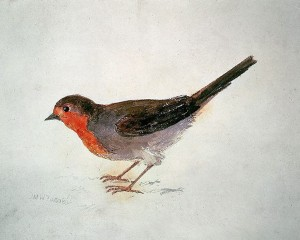 Robin, del Farnley Book of Birds (1816) J. M. William Turner