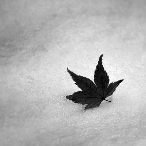 Fulla en la neu