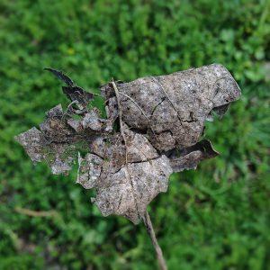 leaf & belief