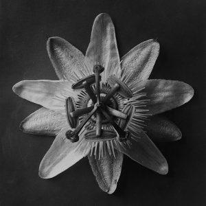 Nectari-Blossfeldt