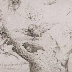 Poeta i mussol, piulades al vol (XIX)