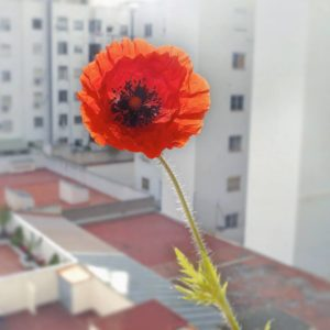 rosella-casa