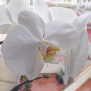 orquidia-casa