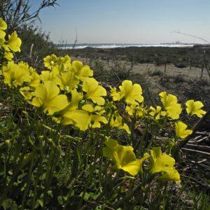vinagrella-platja de castelló