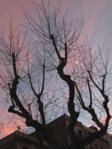 arbresfullat