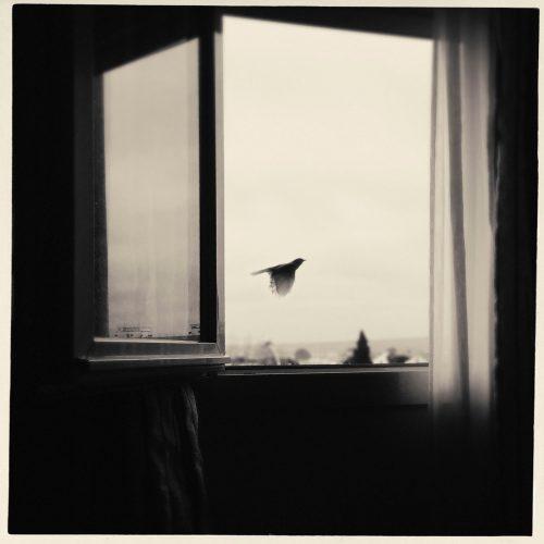 ocell-finestra-porcar