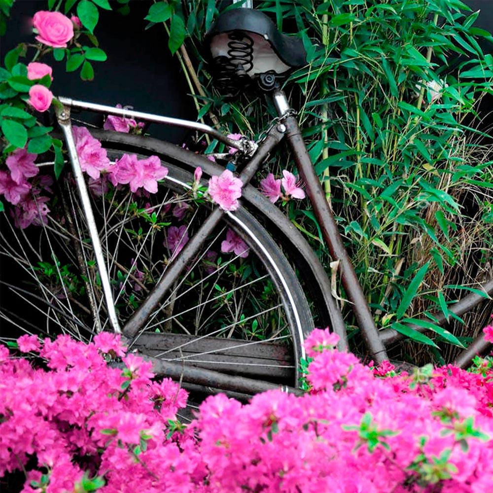 bicicleta_amb_azalees_poema_q