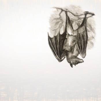 Bat (o la síndrome de Wuhan)